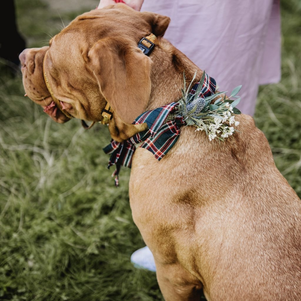 wedding flowers on dogs